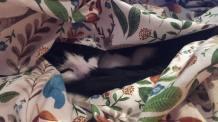 Sheldon wrapped in blanket